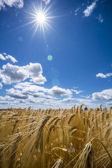 Austria, Hoersching, grain field, barley field - EJWF00855