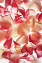 Close up of peach and pink flower petals - CAIF00400