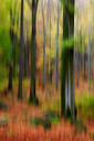 Blurred autumn forest - JTF00935