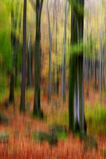 Blurred autumn forest - JTF00935