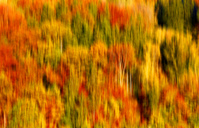 Blurred autumn forest - JTF00938