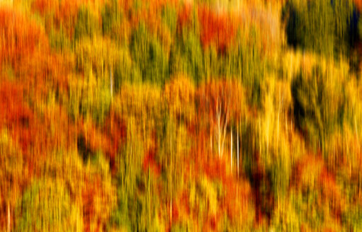 Blurred autumn forest - JTF00938