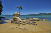 New Zealand, South Island, Abel Tasman National Park, tree on rock at the beach - MRF01746