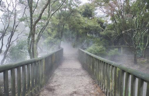 New Zealand, North Island, Rotorua, path through geothermal area - MRF01806