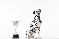 Dog sitting by trophy - CAIF01684