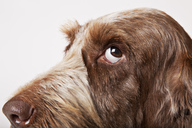 Close up of dog's face - CAIF01690