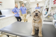 Dog sitting on table in vet's surgery - CAIF01744