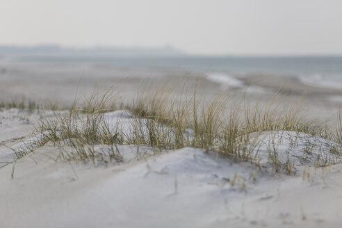 Germany, Mecklenburg-Western Pomerania, Darss, Baltic Sea, West beach, dune - ASCF00831