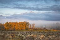 Mist over rural landscape - CAIF02066