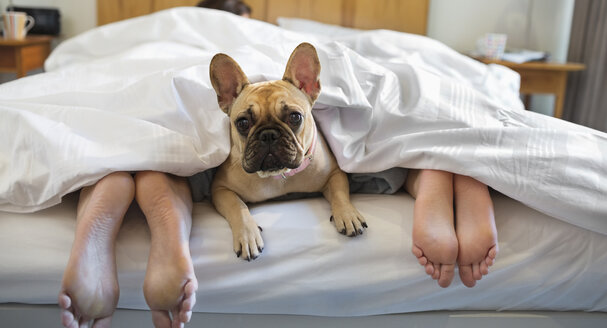 Dog laying under covers with couple - CAIF02198