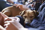 Dog sleeping on owners' laps - CAIF02438