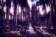 United Kingdom, Scotland, Highlands, Cairngorms National Park, in the woods, blurred - SMAF00956