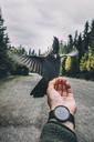 Canada, British Columbia, Steller's jay, Cyanocitta stelleri, sitting on hand - GUSF00314