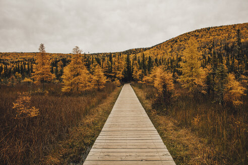 Canada, British Columbia, Liard River Hot Springs Provincial Park, wooden boardwalk in autumn - GUSF00365