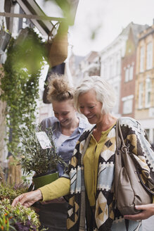 Female florist helping woman shopping for potted plants at storefront - HOXF01857