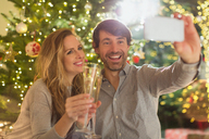 Smiling couple toasting champagne flutes and taking selfie in front of Christmas tree - HOXF01917