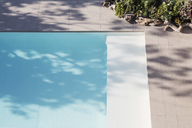 Sunny reflection of tree in blue swimming pool - HOXF01992