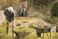 Couple gardening doing yard work raking autumn leaves - HOXF03099