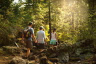 Hikers walking amidst trees in forest - CAVF00039