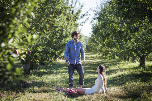 Happy man looking at woman sitting with apple basket at orchard - CAVF01283
