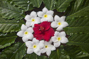 Decoration of frangipani and hibiscus flowers - ZEF15190