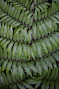 Close up of fern leaf patterns - CAIF08551