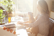 Woman with dog on lap typing on keyboard in sunny home office - CAIF09019