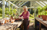Senior woman potting plants in sunny greenhouse - CAIF09133