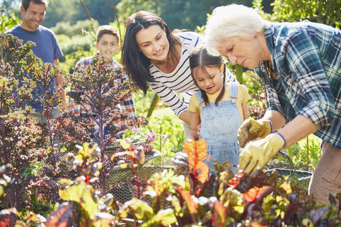 Multi-generation family in vegetable garden - CAIF09172