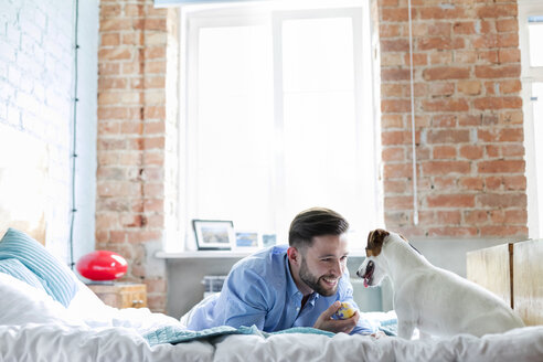 Man playing with Jack Russell Terrier dog on bed - CAIF09692