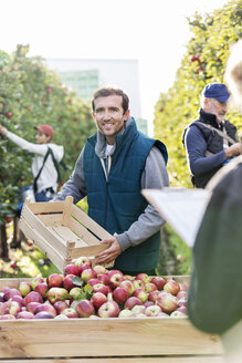 Portrait smiling male farmer emptying harvested red apples into bin in orchard - CAIF09950