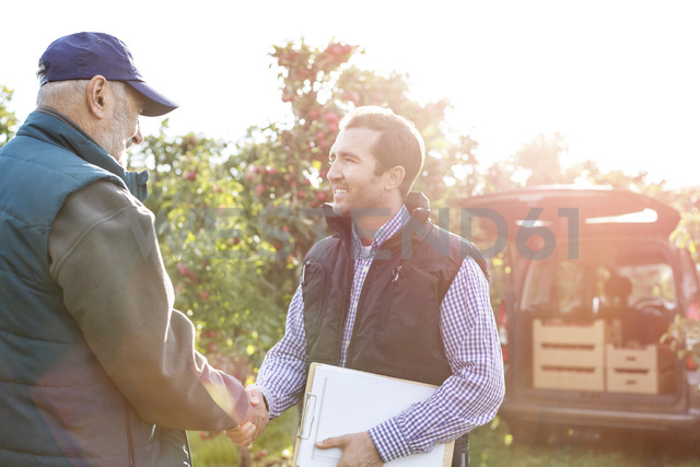 Male farmer and customer handshaking in sunny apple orchard - CAIF09965