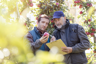 Male farmers with clipboard examining red apple in orchard - CAIF09986