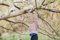 Portrait smiling toddler hanging from tree branch - CAIF11542