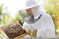 Beekeeper in protective suit examining bees on honeycomb - CAIF13038
