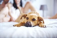 Cute dog laying on bed - CAIF14379