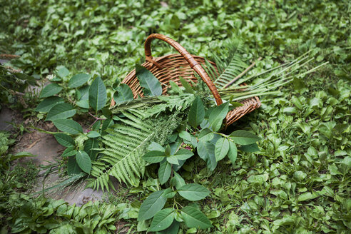 High angle view of leaves in basket on field - CAVF07694
