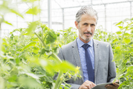 Portrait of business owner with digital tablet among tomato plants in greenhouse - CAIF16512