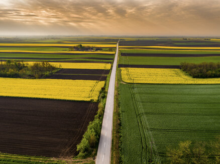 Serbia. Agricultural fields with yellow rape field, aerial view at summer - NOF00016