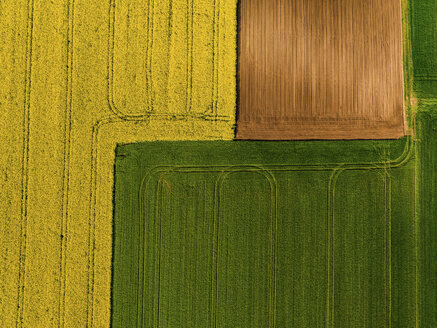 Serbia. Agricultural fields with yellow rape field, aerial view at summer - NOF00019
