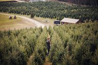 High angle view of woman standing in pine tree farm - CAVF08329