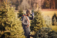 Man looking at chopped pine tree while standing in tree farm - CAVF08341