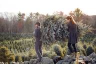 Couple carrying chopped pine tree while walking on rocks at tree farm - CAVF08344