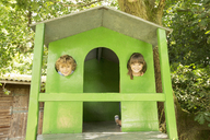 Children peeking through windows of treehouse - CAIF18123
