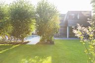 Modern house overlooking sunny backyard - CAIF18946