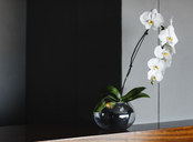 Orchids in vase on counter - CAIF19840
