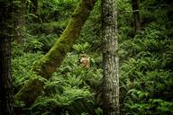 Farmer standing in forest - CAVF11357