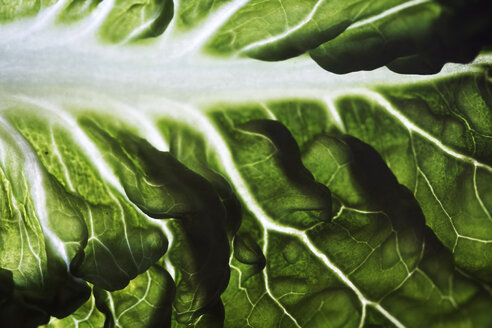 Close-up of lettuce leaf vein - CAVF11591