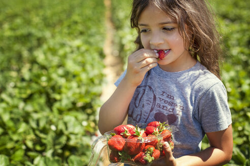 Close-up of girl eating strawberry while standing on field - CAVF11702