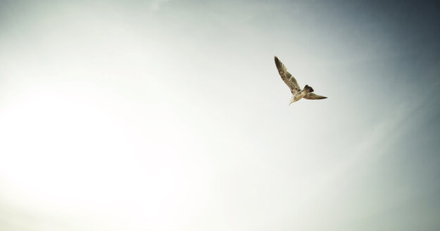 Low angle view of seagull flying in sky - CAVF11965